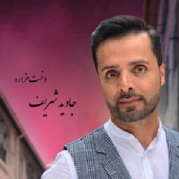 دخت هزاره جاوید شریف
